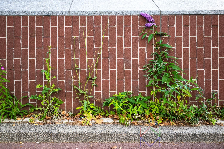 Amsterdam Vijzelgracht Muur Plant Bloem