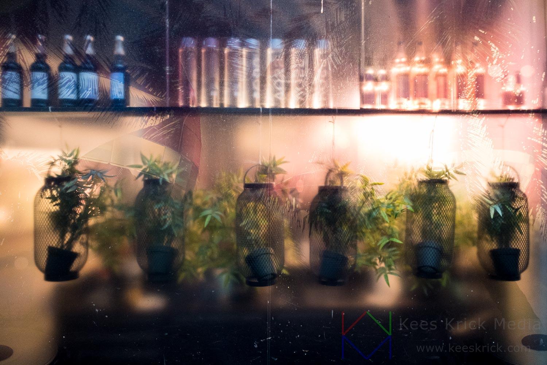 Haarlem -  Gierstraat  - Silhouet van planten en flessen in een Etalage
